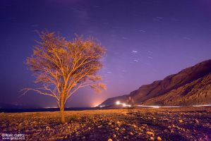 Dead Sea, Live Tree by RoieG