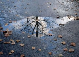 Puddle by jeffreyverity