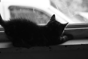 Silhouette Kitty by jennapasechnick