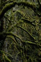 Mossy Trees by MyImaginaryVisions
