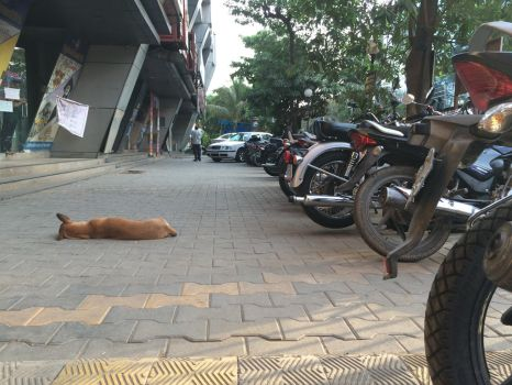 Dog Catnapping by MisterNefarious