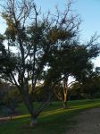 Trees in Balboa Park by CatherineAllison