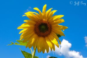 Project 365 - 236 - Sunny Delight by jguy1964