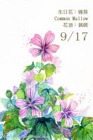 9.17 birthday flower:Common Mallow by haruhiko24