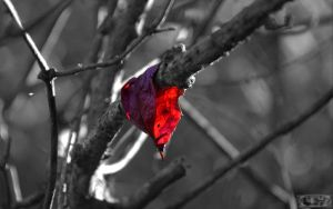 red sheet on a branch by tezdesign