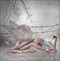 Swans by Mayagraphic
