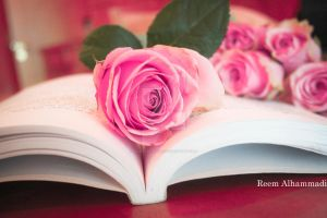Pink roses by princess-reme