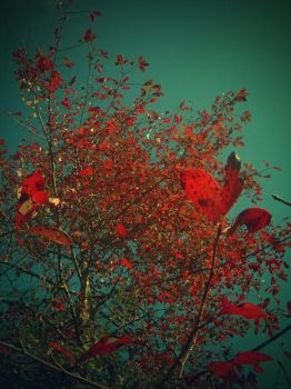 Dying Cries of Autumn by christinavk