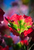 Jewels of autumn by bexa