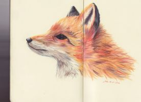 red fox by 22DreamOfMidnight22
