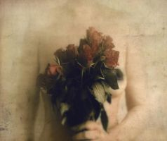 All the roses by LaMusaTriste