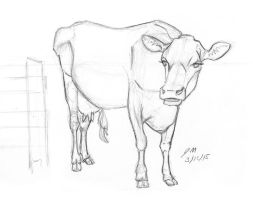 Daily Sketch: Cow Study 031215 by JRMurray76