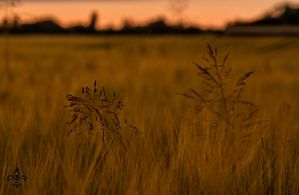fields of the setting sun 04 by Katyma