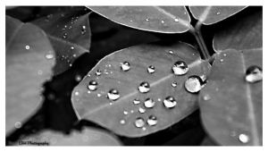 Silver Water droplets by lennerose