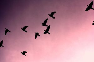 Birds by Eagle-Photography
