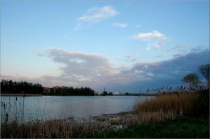 Reeds and water by Andicous