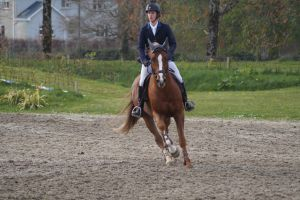 Chestnut Horse - Show Jumping stock - 11.8 by MagicLecktra