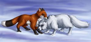 Snow foxes by Totalrandomness