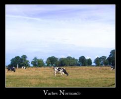 Vaches Normande by Unicorne