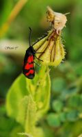 Another Red Bug by Shanyco2