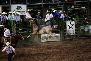 Rodeo: Bronc Riding (10) by DreamsRunningWild