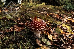 Washed out mushroom by The-Travellers-Tale