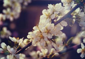 Spring blooms by Korolevatumana