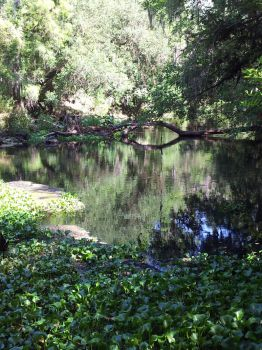Hike on the Hillsborough River 4 by animalwuva101