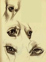 Beagle eyes by thesimplyLexi