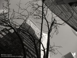 Another Upshot (NYC 2014) Felix Catora by StarMothPhotography