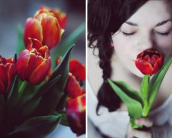 tulip by parallelis
