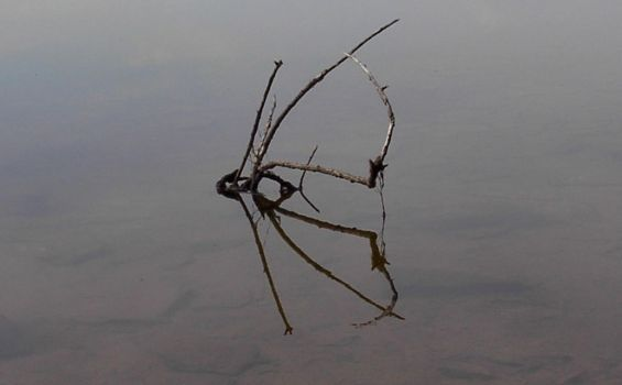 Spider in the Water by LoneRider