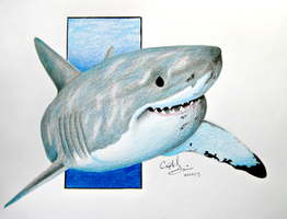 Carcharodon Carcharias by Crystal-Cat