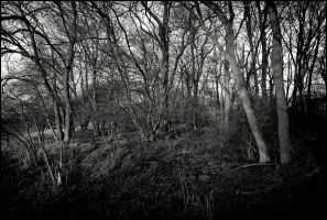 Coppice Tangle by eternumviti