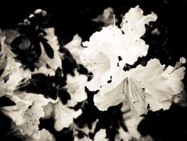 bw flower 2 by ukhan50699