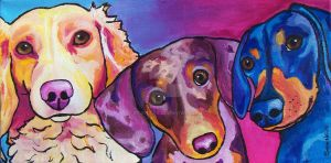 Doxie trio by StudioSRV