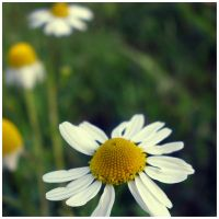 You're given a flower by goudlokje