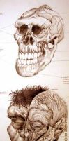 Made-Up Hominid Anatomy by GlendonMellow
