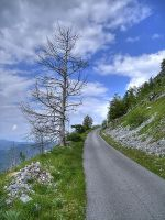 Alone tree and road to mountin by rade32