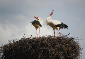 this is our nest by wiingzz