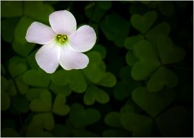 HAPPY ST. PATRICK'S DAY by THOM-B-FOTO
