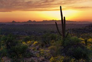 Saguaros and the Setting Sun by ariseandrejoice