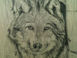 Charcoal Wolf by royalhighmess