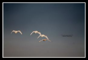fly to fourth by declaudi