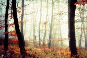 who knows... by ildiko-neer