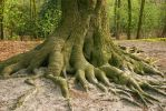 Roots by karel57