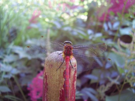 Fairyfly by Pentacle5