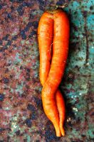 Twinned Carrot_reverse by lamorth-the-seeker