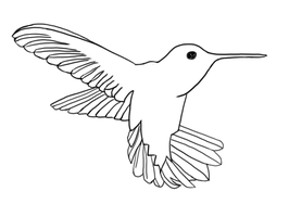 #1 Humming Bird Contour by dthlnc