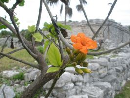 Tulum by maurici0